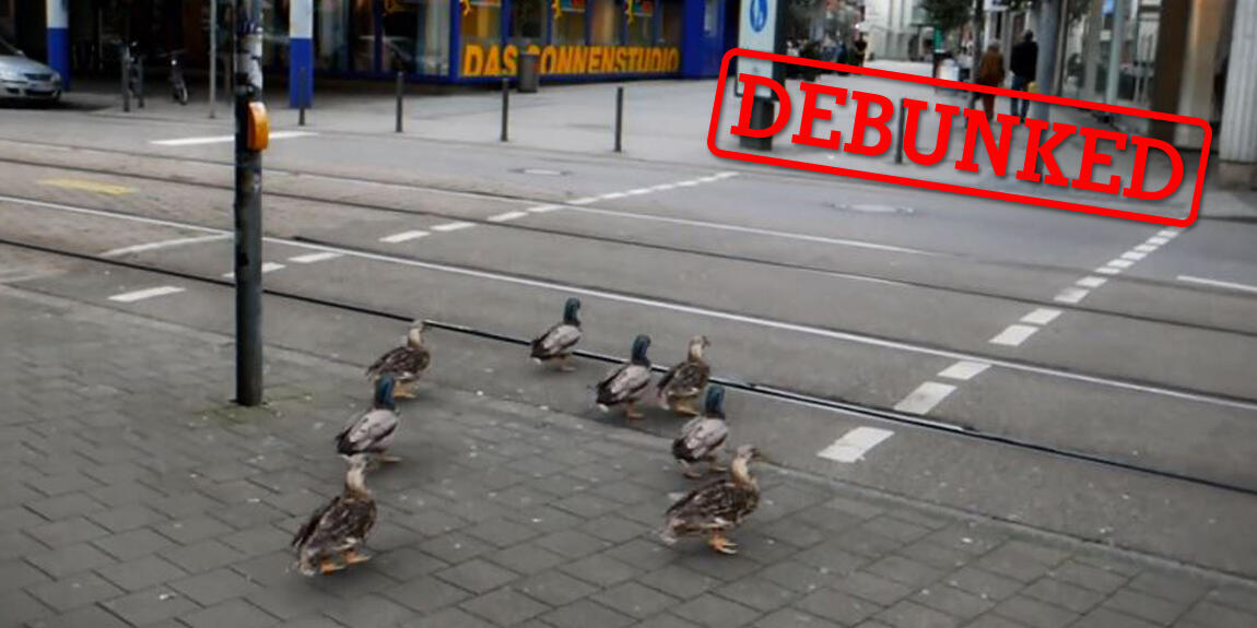 Screengrab of a video made by a German advertising firm that shows ducks stopping at a red light.