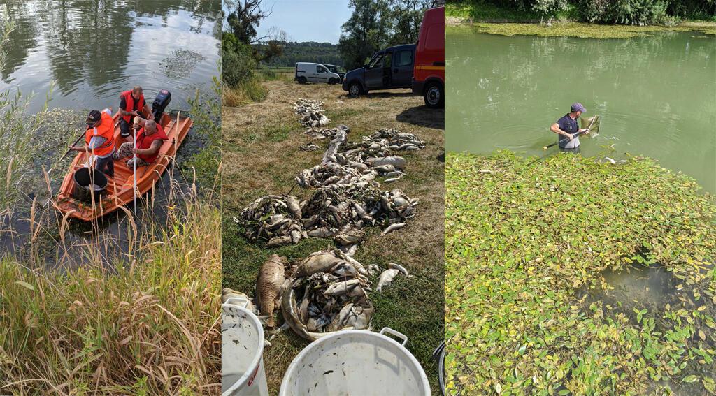 Du 11 au 13 août, des volontaires ont répondu à l'appel de la Fédération de pêche des Ardennes pour nettoyer des tonnes de poissons morts dans une rivière. Crédits : Fédération de pêche des Ardennes/Facebook.