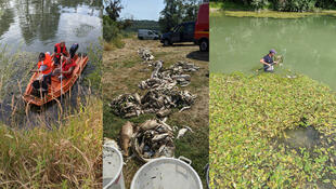 From August 11 to 13, volunteers joined the Ardennes Fishing Federation to clear the carcasses of tonnes of fish found in the Aisne river (Photos: Fédération de pêche des Ardennes/Facebook).