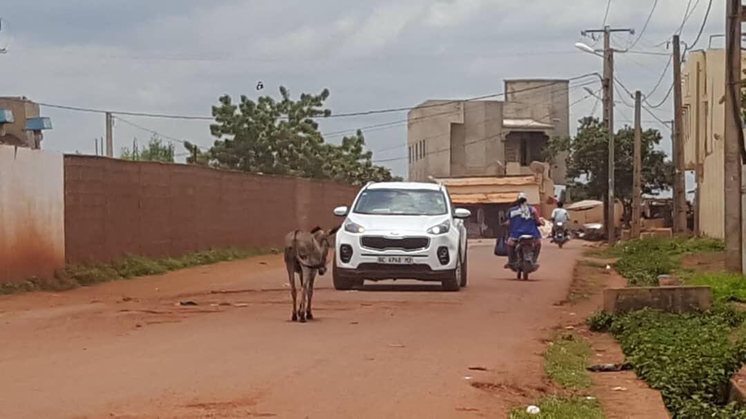 Photo prise par notre observateur à Bamako documentant la présence d'ânes au milieu d'une voie de circulation.