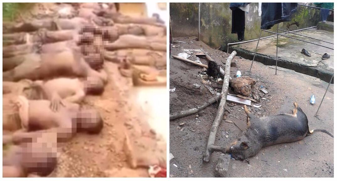 On the left, a blurred photo of the men abused by Nigerian military. On the right, the corpse of the Kanu family dog.