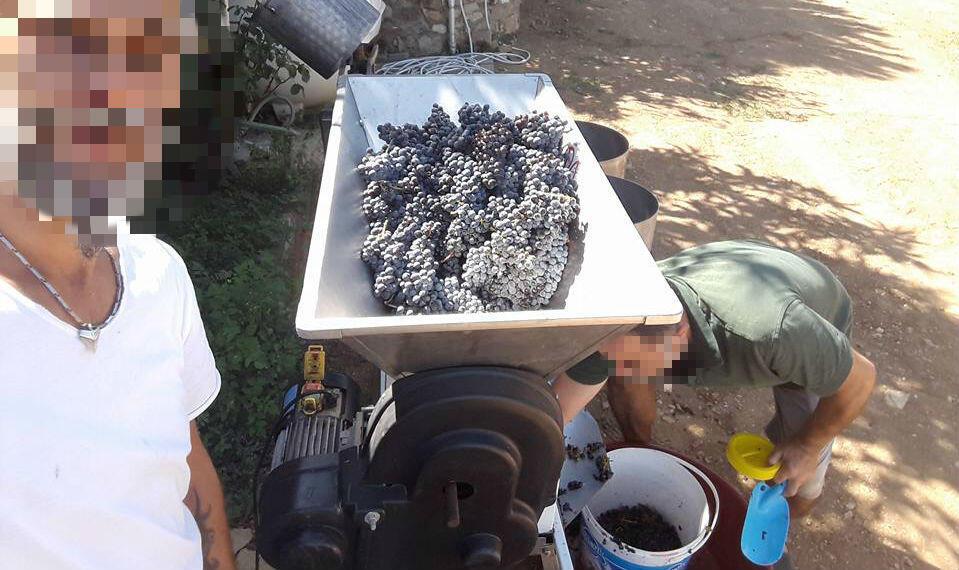 Un Turc fait un selfie alors qu'il commence à fabriquer du raki, une eau-de-vie à base de raisin et d'anis.
