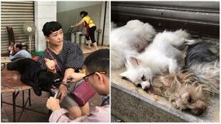 On the left, a dog having its vocal cords cut out, and on the right, dogs left while waiting for anaesthetic to wear off. Photos from Chengdu Business Daily.