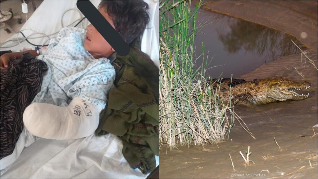 """À gauche, Amirhamzeh, 7 ans, a perdu son bras dans une attaque de crocodile le 11 août. À droite, un crocodile """"gando""""."""