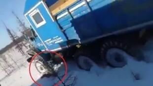 Sous le camion qui avance dans le froid sibérien, un ours. Ses agresseurs russes, hilares, ont roulé à plusieurs reprises sur lui.
