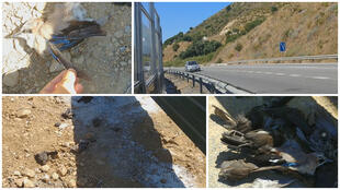 On July 2, a local resident filmed dozens of dead birds lying below a transparent noise barrier built next to a road in the south of Spain. (Photo: Marabella Se Queja / Diego Escalona)
