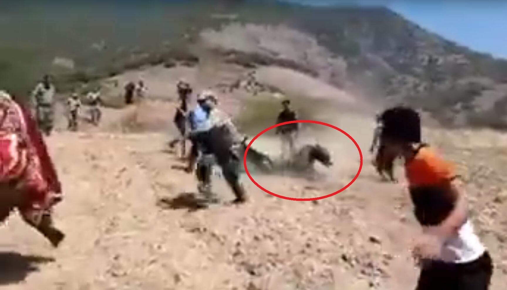 Cet ours était, selon la version officielle des gardes-forestiers iraniens de la province du Golestan, mort de maladie. Une vidéo amateur a révélé qu'il avait en fait été tué par ces derniers.