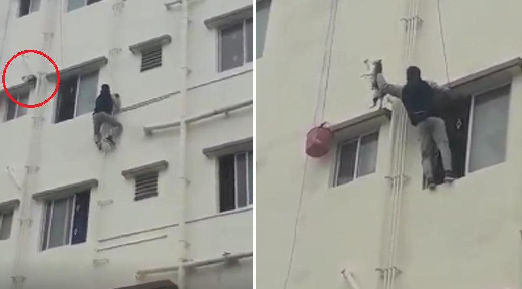 Asrar Ousmani, 22 ans, escalade un bâtiment pour sauver un chat coincé dans les barreaux d'une fenêtre en septembre 2019.