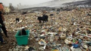 Thousands of tonnes of waste have washed up on Mumbai's shoreline.
