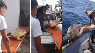 This video, which was posted on Facebook, shows a fisherman in Sousse letting a sea turtle free. (Screengrab)