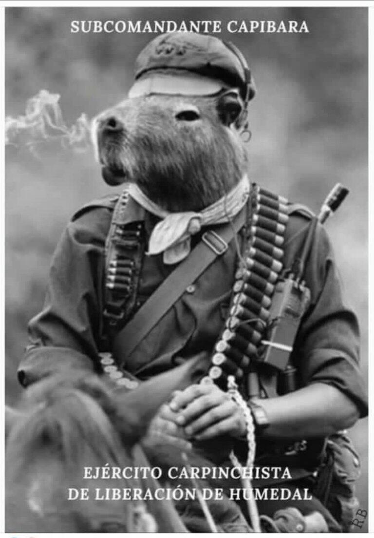 """""""Sous-commandant capybara - Armée de capybaras de libération des zones humides"""" (mème)"""
