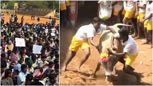 On the right, people from India attempt to tame a bull while taking part in the traditional sport of Jallikattu. In 2014, this ritual was banned by the Indian Supreme Court. The photo on the left shows people protesting against the ban.