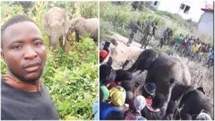 Residents of Nzérékoré, Guinea, were surprised to see elephants come into their town. (Photo: Sekouba Beréte, Nouhan Sidibé.)