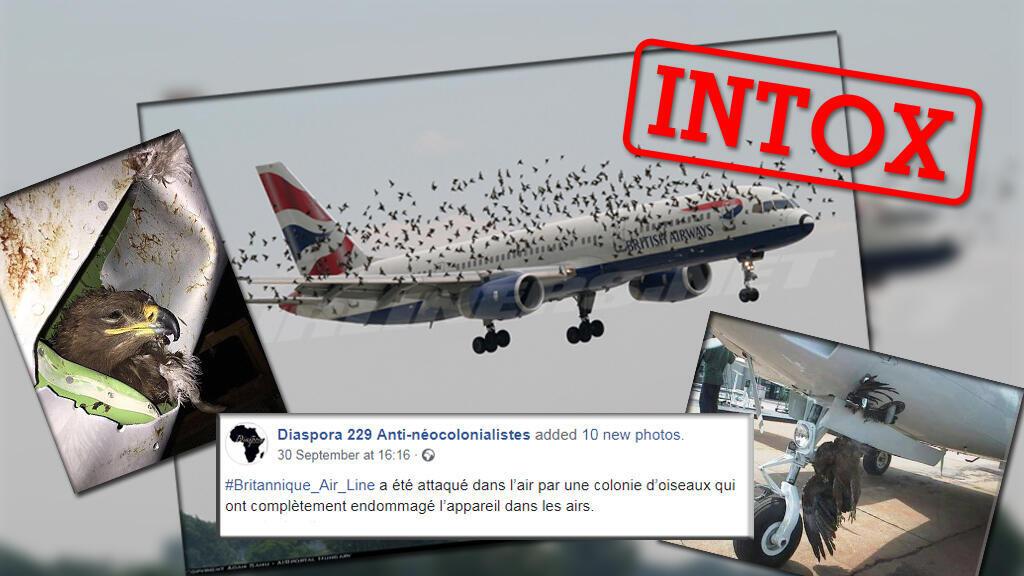 """Un avion de la """"British Airways"""" a-t-il été attaqué par une nuée d'oiseaux dont des aigles ? Ces photos alimentent un hoax déjà très populaire l'année dernière au Nigéria."""