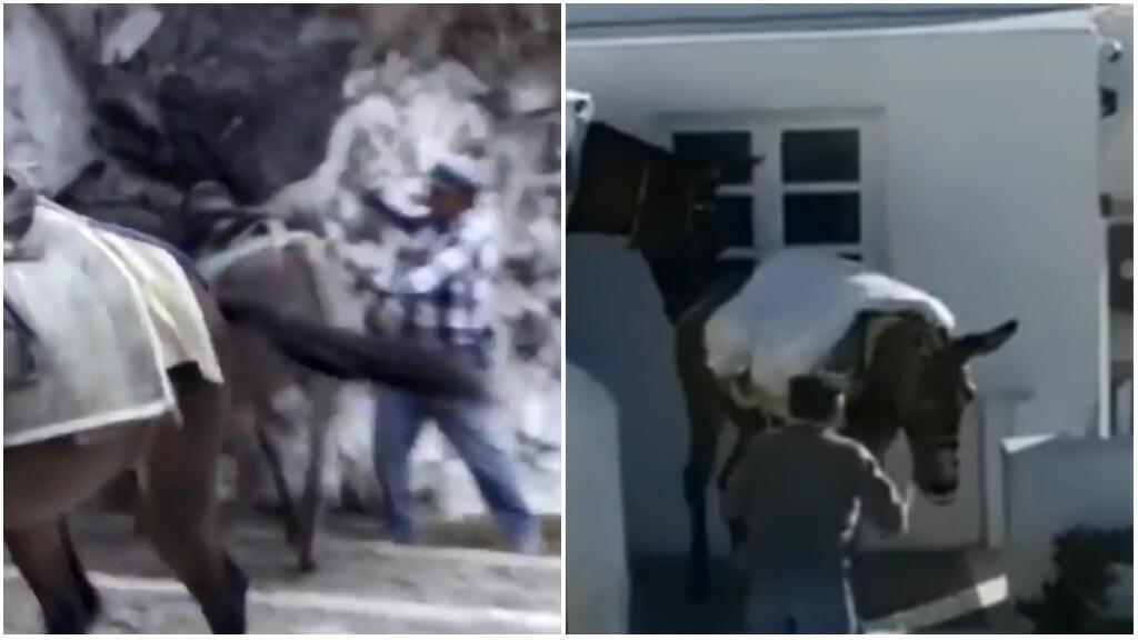 Captures d'écran montrant les abus subis par les ânes de l'île de Santorin.