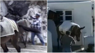 Screengrabs showing abuses suffered by donkeys on Santorini island.
