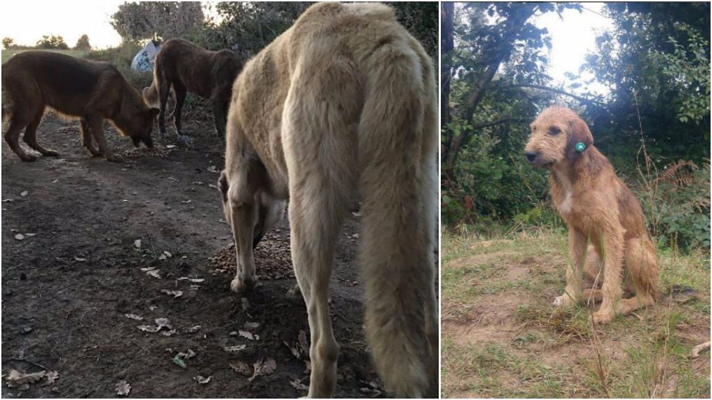 Des chiens abandonnés dans la périphérie d'Istanbul. Photos publiées sur Facebook et Instagram par des activistes.