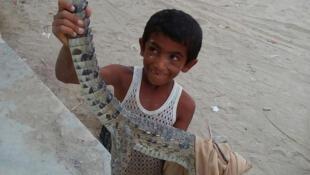 زکریا جان یک گاندوی گیر افتاده در یک برکه خشک شده را نجات داده است.