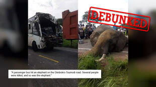 Ivorian websites claimed that an elephant was fatally struck by a bus. The photos are real but were taken in another country. (Photo: Facebook)