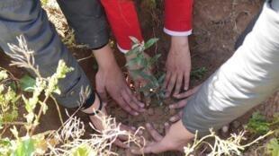 """Des petites mains plantent un arbre, photo publiée par la page Facebook """"Acacias for All"""""""