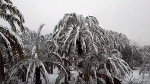 Capture d'écran de la première vidéo ci-dessous, prise le 29 janvier à Zagora.