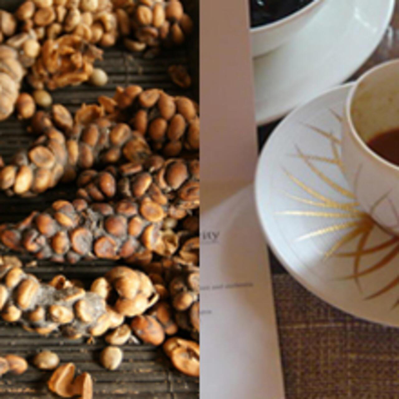 هل تعلمون أن أغلى قهوة في العالم تحض ر من البراز