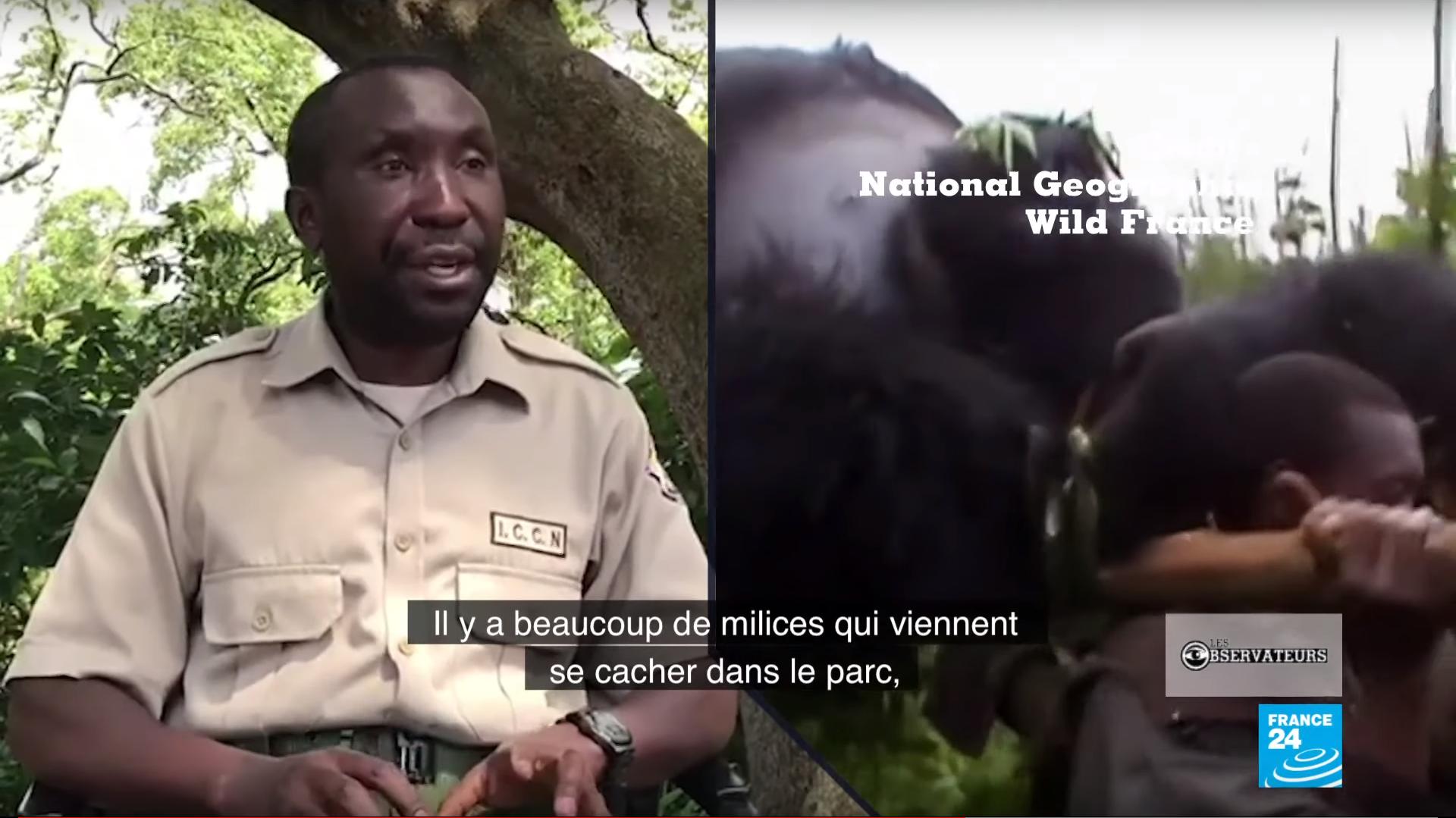 André Bumia, responsable du sanctuaire pour gorilles orphelins au pars national des Virunga, situé à l'est de la République démocratique du Congo.
