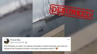Lots of people shared this video of what they thought was a dolphin swimming near a port in the south of France. Many thought this footage was evidence of wildlife reclaiming spaces now that the pandemic has disrupted human activities.