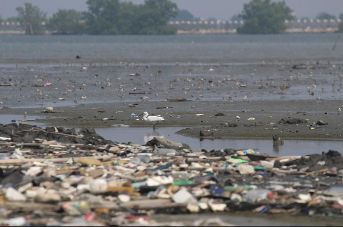 Photo d'oiseau migrateur devant la marée de boue, près de la mangrove envoyée par Diovanie De Jesus aux Observateurs.