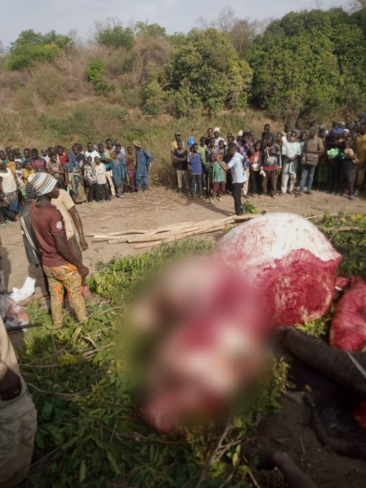 These images show the carcass of the elephant killed by forest workers in the town of Kandi, in northwest Benin.