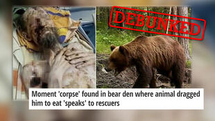 Outlets around the world ran with a fake story about a man attacked by a bear.