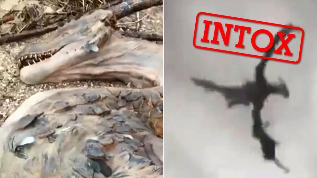 Captures d'écran de deux vidéos montrant soi-disant des dragons au Yémen