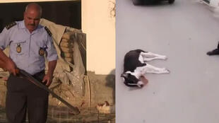 It's still a common practice to kill stray dogs in some cities in Tunisia.