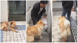 À Chongqing, ce chien attend chaque jour que son maître rentre du travail a la sortie du métro