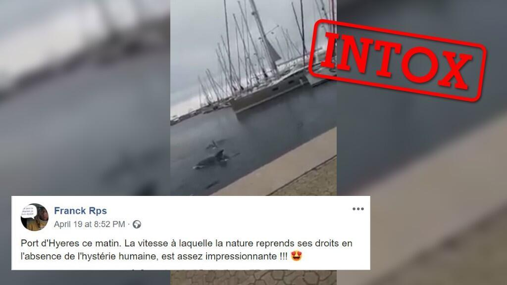 Cette vidéo prétend montrer un dauphin dans un port du sud de la France. Capture d'écran / réseaux sociaux.