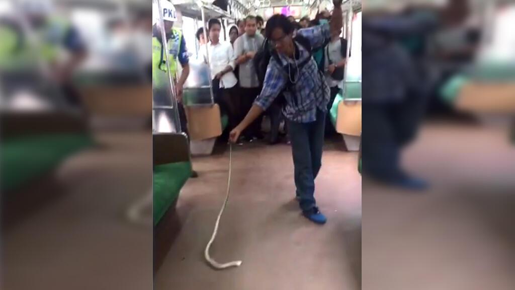 Un Indonésien a étonné le web en neutralisant à main nue un serpent dans un train. Capture d'écran vidéo.