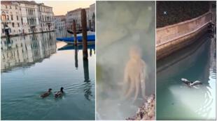 Captures d'écran de plusieurs vidéos relayées par le groupe Venezia Pulita sur les réseaux sociaux.