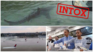 Un requin, des avions sous les eaux, et Barack Obama qui sert des repas... toutes ces photos n'ont rien à voir avec les inondations à Houston.