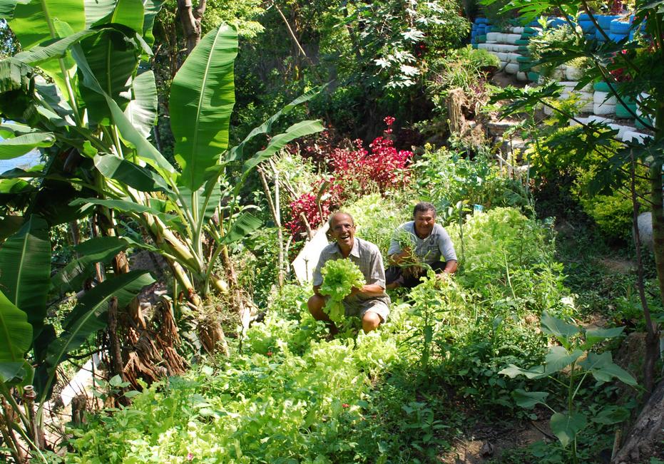 Le parc bénéficie d'un potager dont les récoltes sont redistribuées aux habitants de la favela. Photo : Instituto e Parque Sitiê.