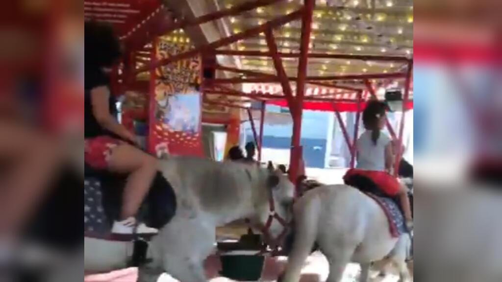 Cette vidéo montrant un manège avec de vrais poneys dans une foire de Bruxelles a fait polémique sur les réseaux sociaux. Capture d'écran / Twitter.