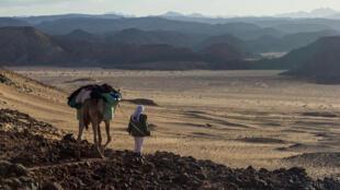 Un chamelier bédouin en août 2014 à Wadi Safra dans le désert du Sinaï. Toutes les photos ont été prises par Evan Bryant de l'organisation Abraham Path Initiative.