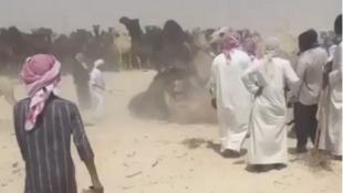 Capture d'écran d'une vidéo Twitter montrant des centaines de chameaux passer la frontière en l'Arabie saoudite et le Qatar.