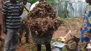 """Les feuilles utilisées dans la préparation du compost """"magique""""."""