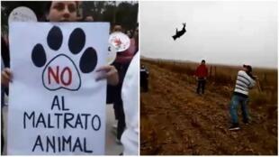 À gauche : capture d'écran d'une vidéo tournée le 6 mai à Villa del Rosario, lors d'un rassemblement contre la maltraitance animale. À droite : capture d'écran d'une vidéo dans laquelle un chien se fait tuer, tournée dans la zone quelques jours plus tôt.