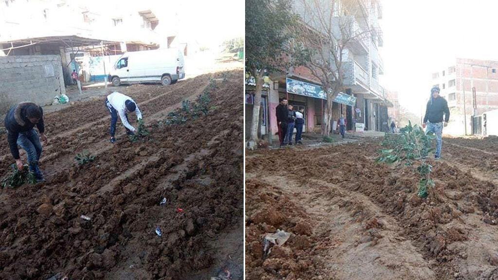 صور نشرت على موقع فيس بوك يظهر فيها سكان بلدة بغلية في الجزائر وهم يزرعون شارع بلدتهم