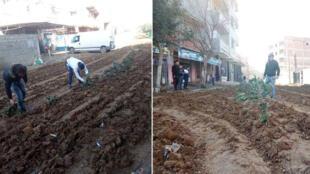 Photos relayées sur Facebook, montrant les habitants d'un quartier de la ville de Baghlia en Algérie planter des légumes sur une route en chantier.