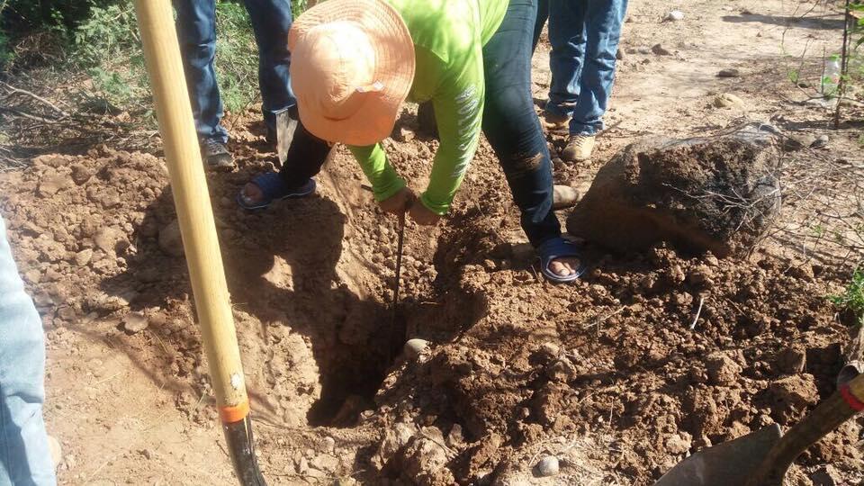 """Les femmes introduisent des baguettes dans la terre pour repérer les endroits où des restes humains pourraient se trouver. Photo publiée le 17 août sur la page Facebook """"Las Rastreadoras del Fuerte""""."""